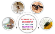 Tecuci - DERATINSECT CONSTRUCT SRL